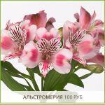 Альстромерия-100-руб