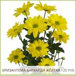 Хризантема-Баккарди-Жёлтая-120-руб