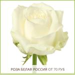 Роза-Белая-Россия-от-70-руб