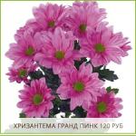 Хризантема-Гранд-Пинк-120-руб