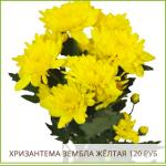 Хризантема-Зембла-Жёлтая-120-руб