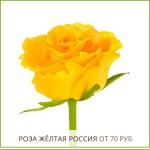 Роза-Жёлтая-Россия-от-70-руб