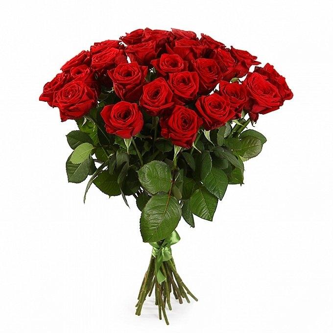 25 красных роз 70 см.